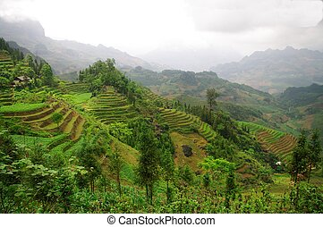 A North Valley in Vietnam - In northern Vietnam, all the...
