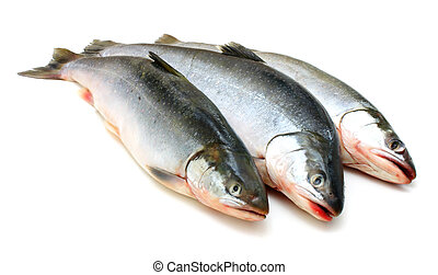 Fresh fish - Three fresh sea fishes lie nearby on a white...