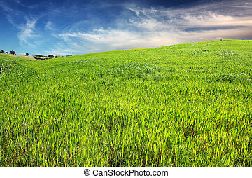 Green Grass and blue sky - A hill of green grass with a...