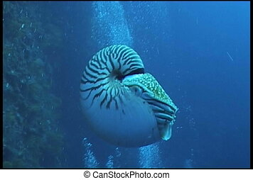 nautilus underwater video - diving underwater video