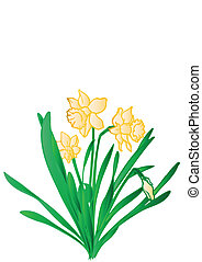 Vector illustration a green bush with yellow flowers narcissuses.