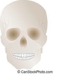 Vector illustration a human skull with earl by a holiday halloween