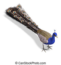 gorgeous male peacock 3D rendering with clipping path and...