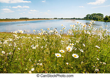River the Lek in Holland - Landscape with daisies near the...