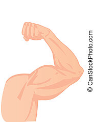 Vector illustration a human hand and a biceps