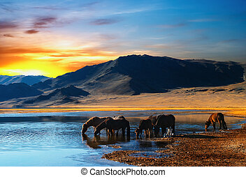 Drinking horses - Herd of horses in mongolian wilderness