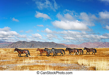 Running horses - Herd of horses in mongolian desert
