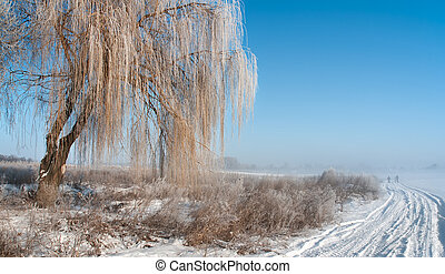 Foggy frosty morning 2 - Winter landscape with fog, rural...