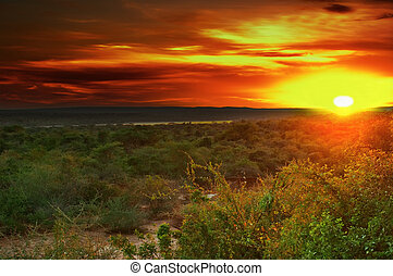 Sunrise in african savanna, Nile valley