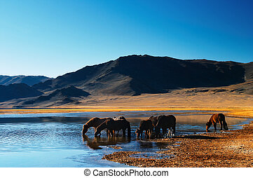 Drinking horses in mongolian wilderness