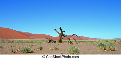 Skeletal dead tree - Skeletal carcase of dead tree in desert...