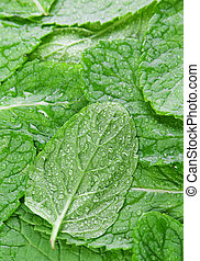 Spearmint herb background - Spearmint green herb leaf...