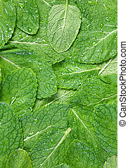 Spearmint herb background