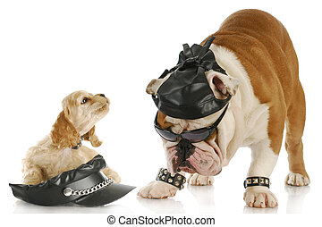 cool dogs - english bulldog and cocker spaniel puppy dressed...