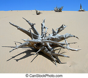 Skeletal dead tree - Skeletal carcase of dead tree in desert...