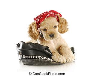 biker puppy - cute cocker spaniel puppy wearing skull cap...