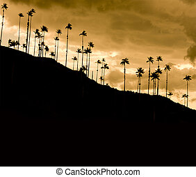 Dramatic sunset in Cocora valley, Colombia - Cocora Valley,...