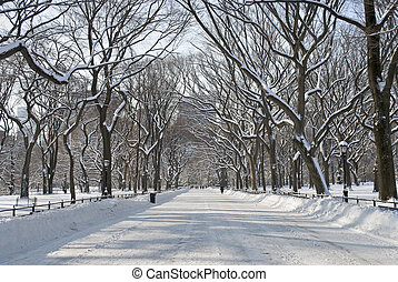 Snowy Central Park Mall - The snow covered trees in the mall...