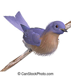 Bird Female Western Bluebird. 3D rendering with clipping...