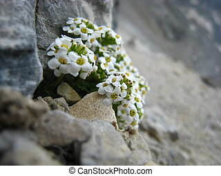 Little white and yellow wildflowers at the top of a mountain...