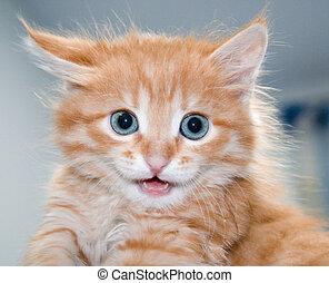 Cute orange kitten with blue eyes