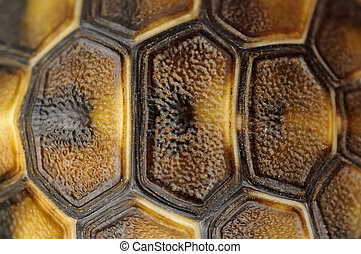 Tortoise shell  - Close up on tortoise shell