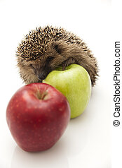 Little hedgehog and apples