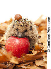 Hedgehog sitting on leaves - A hedgehog is any of the small...