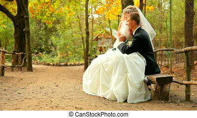 bride and groom on a park bench - bride and groom sitting on...