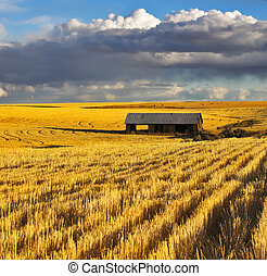 The field after harvesting