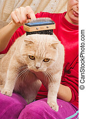 Grooming Cat Brush - Grooming brush for cutting plica of cat...
