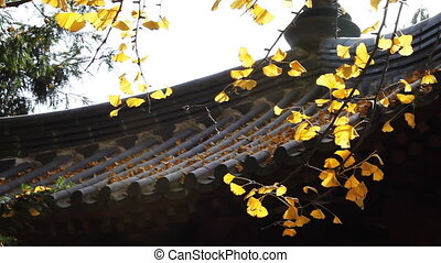 autumn_building_1.mov - maidenhair tree and chinese...