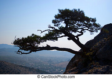 Tree growing on the rocks