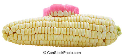 corn on the cobb isolated on white - funny image of corn on...