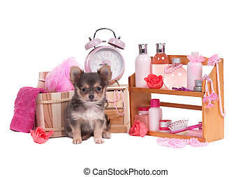 Shelf full of body care accessories and Chihuahua sitting in...