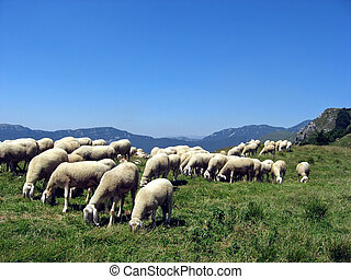 flock of sheep in green meadow