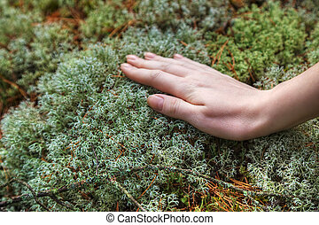 Woman hand touching moss - Young woman hand touching forest...