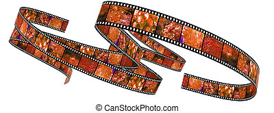 Segment color film rolled up filled by pictures of nature