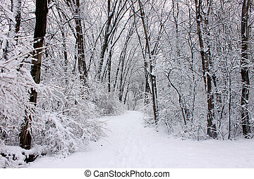 Rock Cut State Park - Fresh snowfall along a hiking trail in...