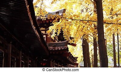 autumn_building_12.mov - maidenhair tree and chinese...