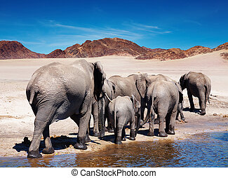 Elephants - Herd of elephants at watering