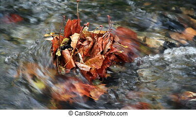 Fall Leaves in Mid-stream HD - Fallen autumn leaves stuck in...