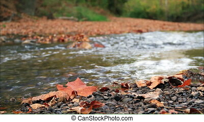 Shimmering Autumn Stream HD - A small creek flows with...