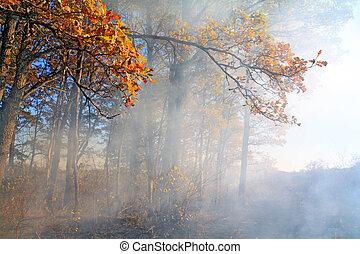 smoke in autumn wood