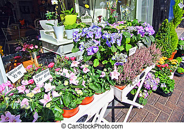 Flowers display in front of flower shop, St Albans, Scotland