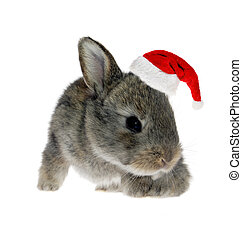 Little rabbit in Santa Claus hat against the white...