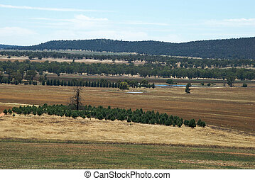 rural - a small pine plantation on farming land