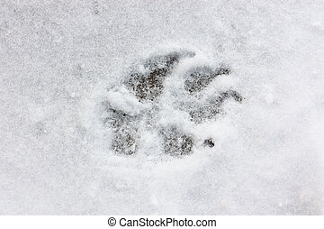 Dog track - A dog track on snow