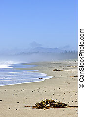 Coast of Pacific ocean in Canada - Long Beach in Pacific Rim...