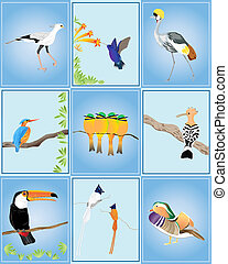 birds of the world - an illustration of different types of...